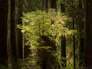 2019 Wonders of the Forest - Olympic National Park