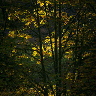 autumn, leaves, trees, forest, oregon
