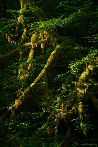 mossy, olympic national park, washington