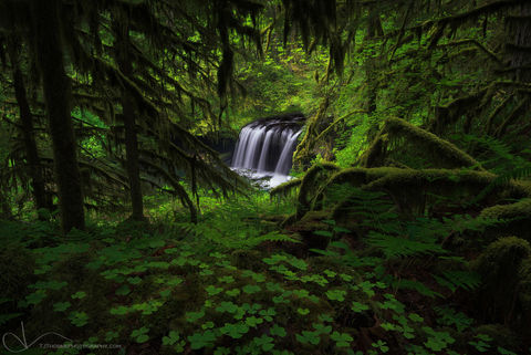 upper butte creek, waterfall, spring, ferns, moss, forest, oregon, clover, oxalis