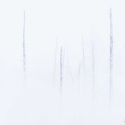 trees, snow, winter, yellowstone national park, wyoming, steam
