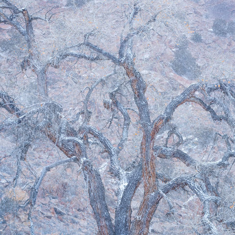 cottonwood, tree, winter, snow, storm, utah, canyon