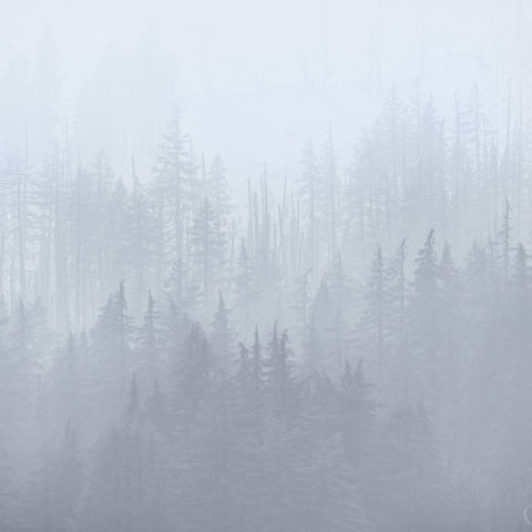 forest, smoke, fog, crater lake, oregon, wildfire