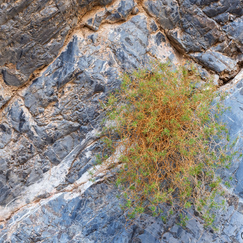 arrowleaf, canyon, death valley, national park, california