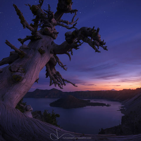 oregon, crater lake, stars, tree, twilight, artist-in-residency