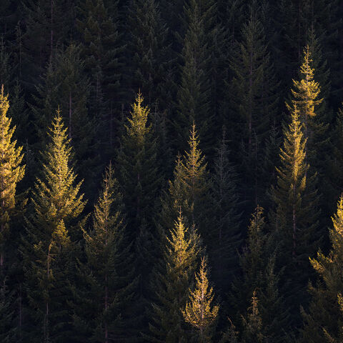 trees, mt. hood, oregon, forest, light