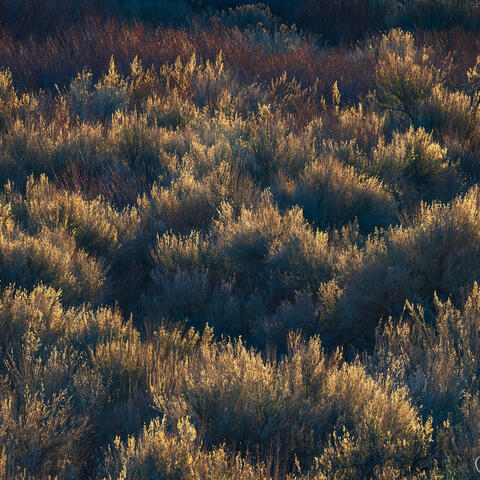 desert, brush, light, owens river valley, california
