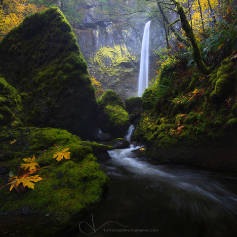 oregon, waterfall, falls, autumn, color, columbia river gorge, creek, moss