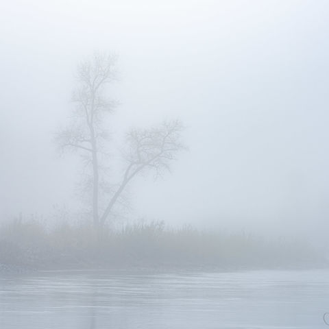 tree, fog, river, morning, oregon, clackamas