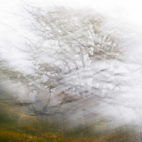 tree, abstract, ICM, ME, forest, oak