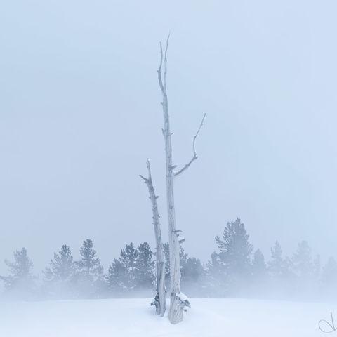yellowstone, wyoming, trees, snow, steam, winter, geyser