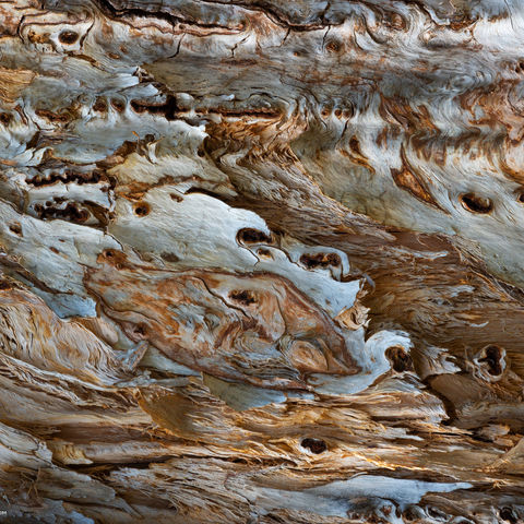 texture, crater lake national park, oregon, wood, tree