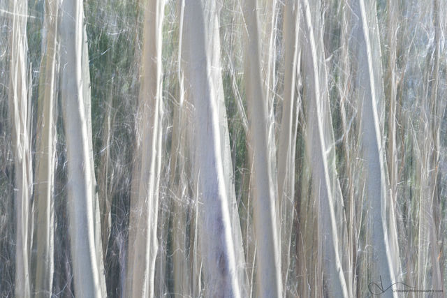 trees, forest, abstract