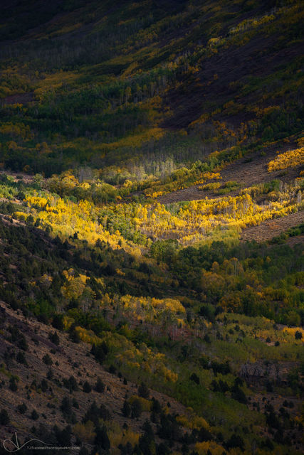 oregon, autumn, steens, mountain, aspen,