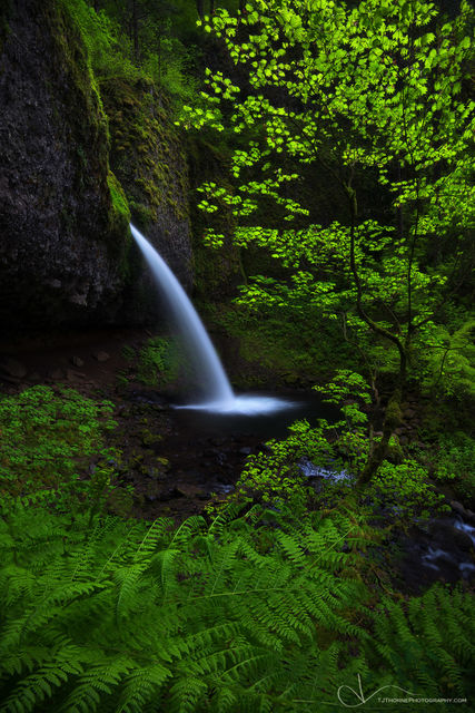 ponytail falls, waterfall, eagle creek, oregon, spring, ferns, fairytale, columbia river gorge