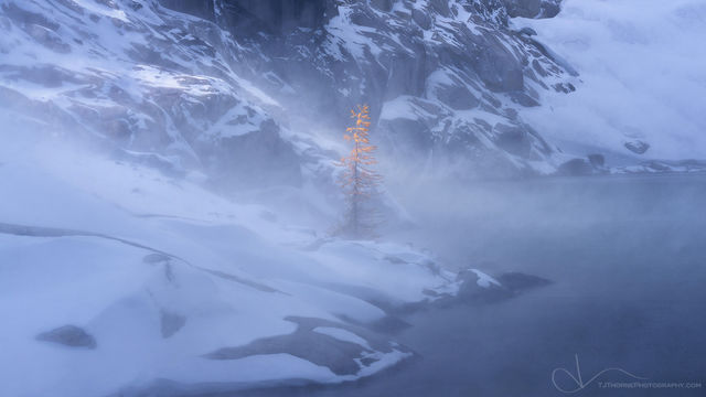 larch, snow, enchantments, washington, tree