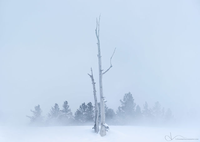 yellowstone, wyoming, trees, snow, steam, winter, geyser