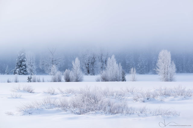 frost, trees, snowy, winter, grand teton national park, wyoming