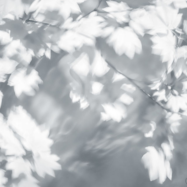 abstract, leaves, water, tree, branch, black, white