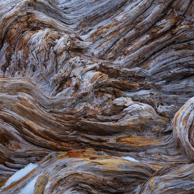 Wood Textures - Current Exploration