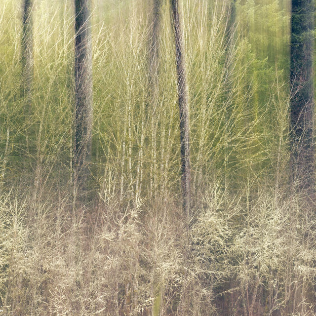trees, forest, green, ICM, abstract, multiple exposure
