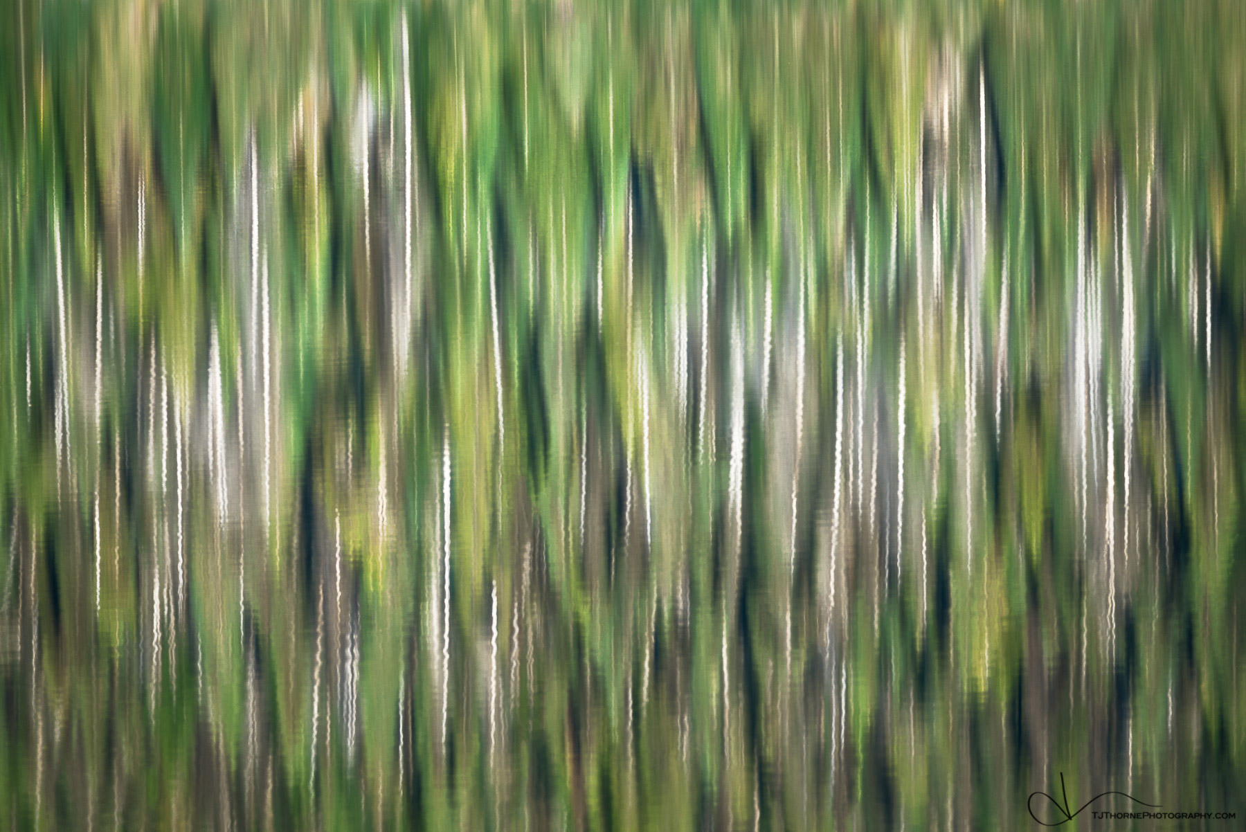 Landscape, abstract, design, green, lake, nature, oregon, pacific northwest, pine, reflection, tj thorne, trees, wallpaper, water...