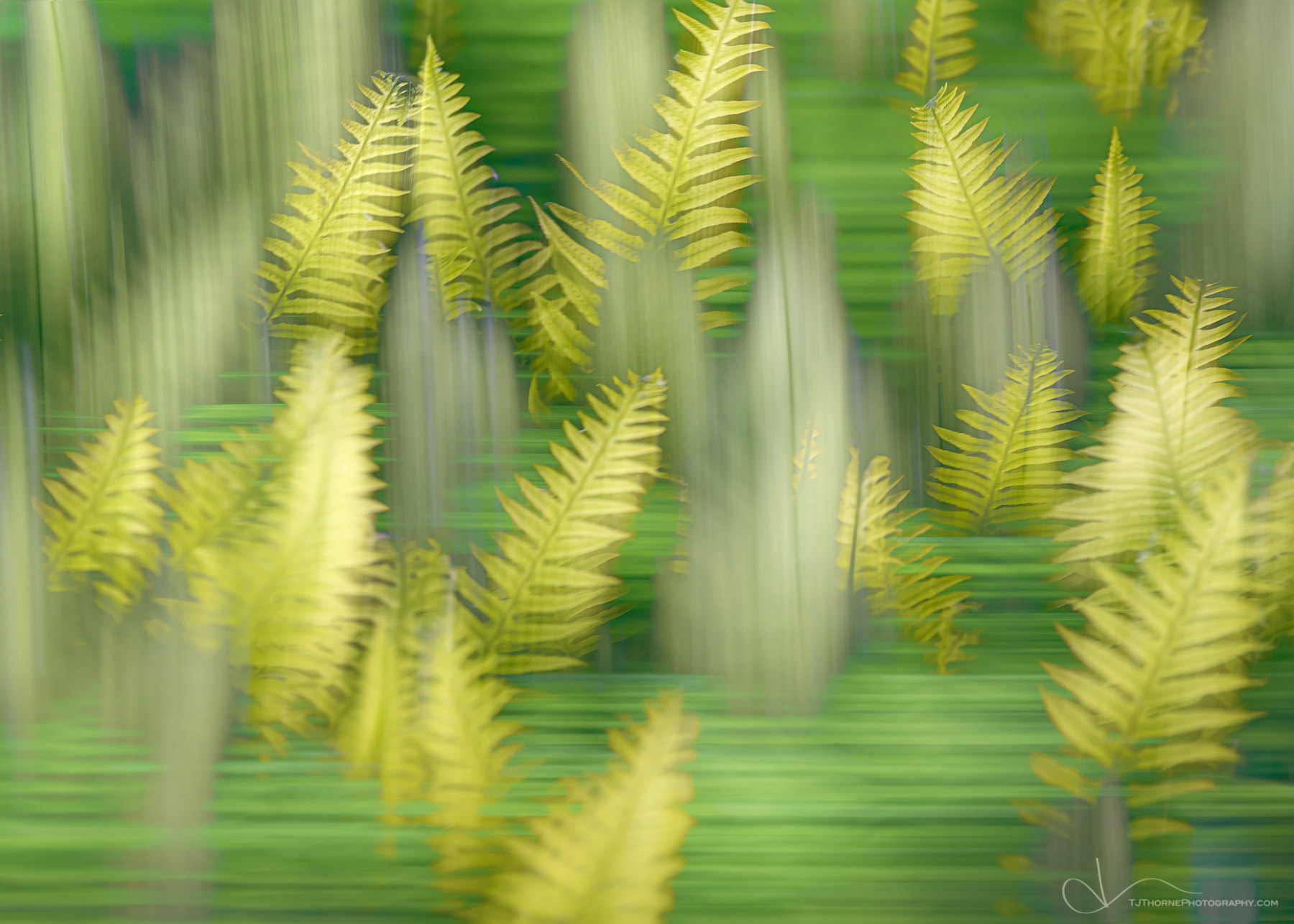 green, ferns, abstract, figment, photo