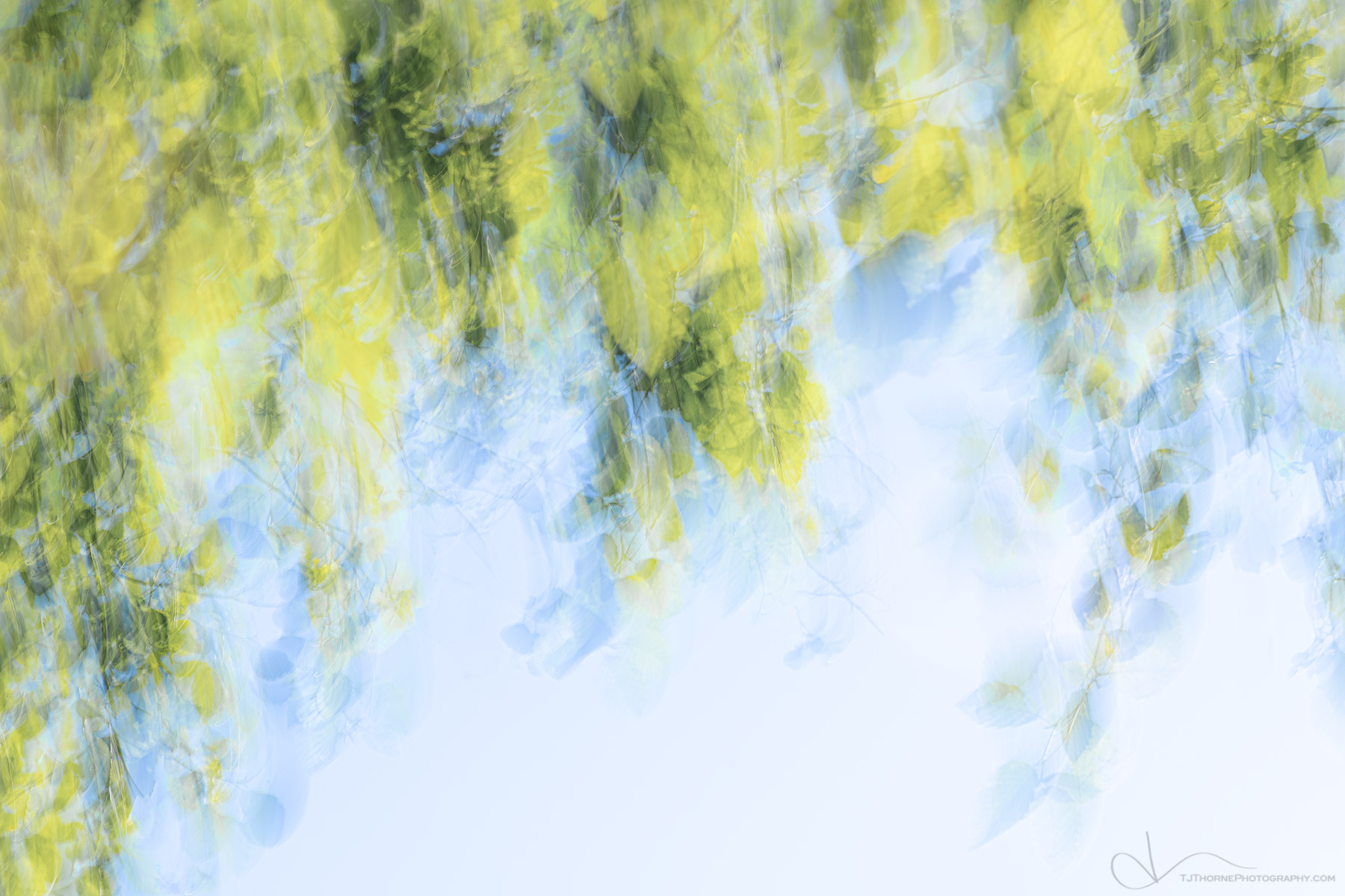 abstract, branch, tree, spring, photo