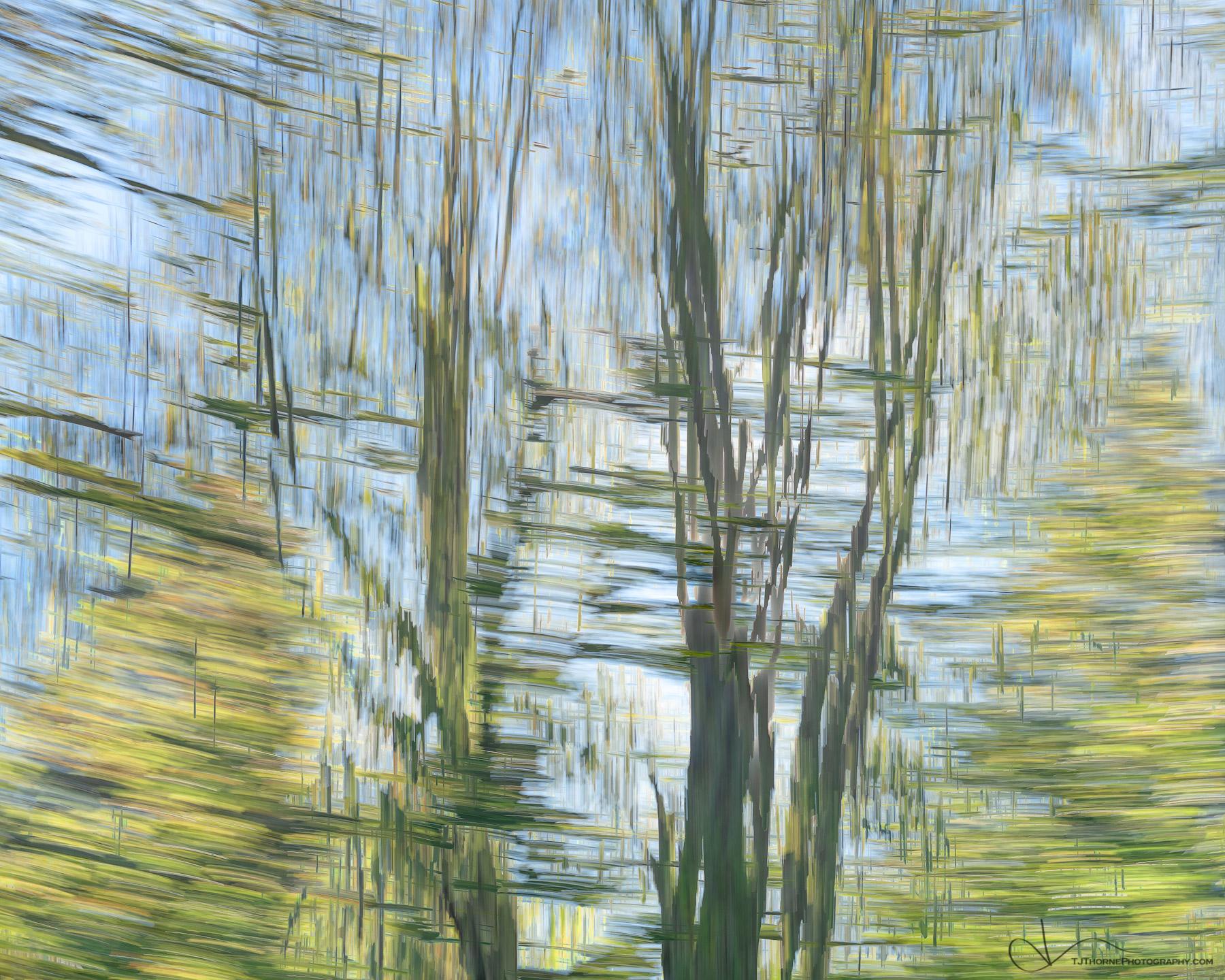 tree, abstract, photo