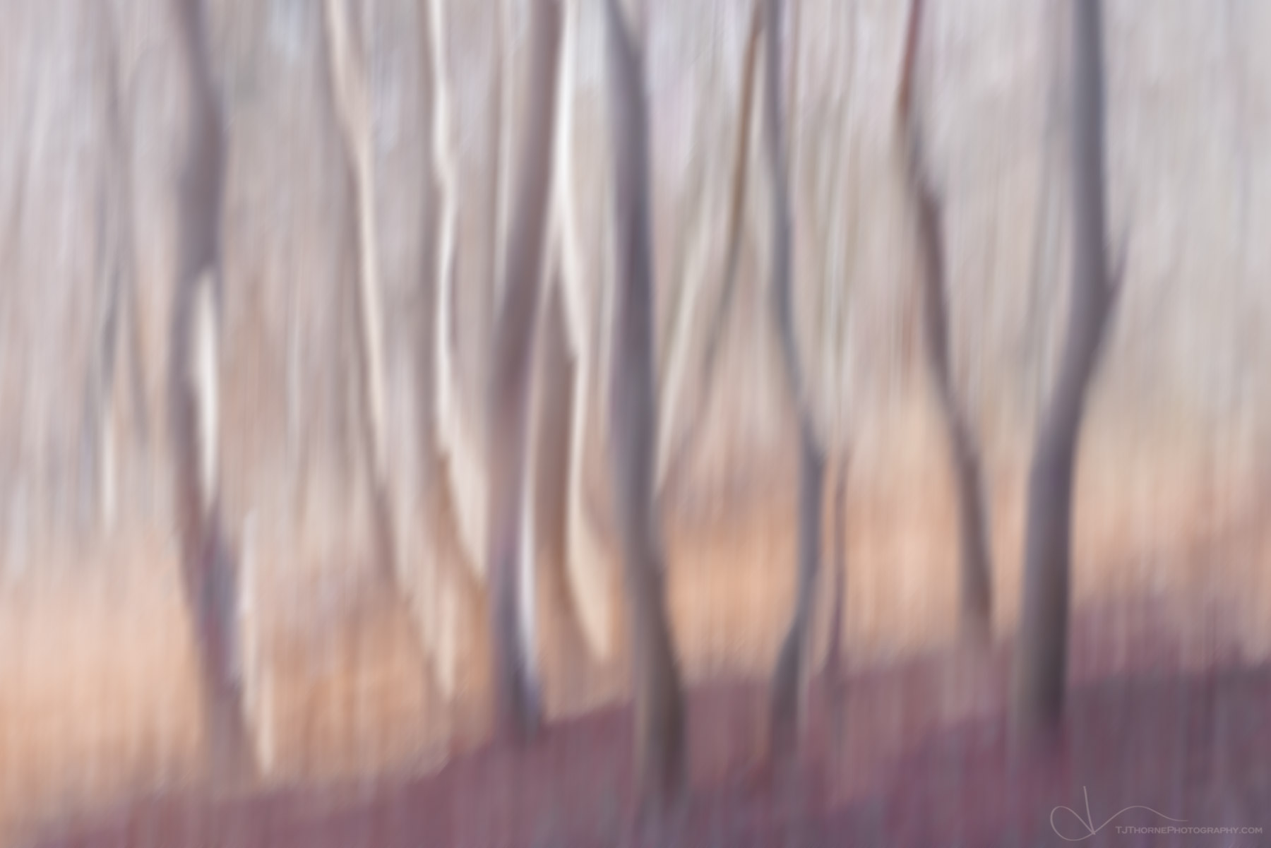 tree, abstract, forest, photo