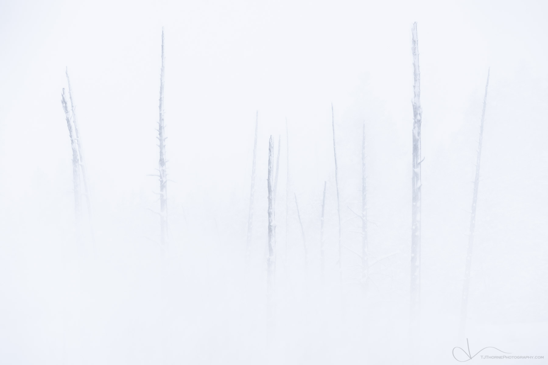trees, snow, winter, yellowstone national park, wyoming, steam, photo