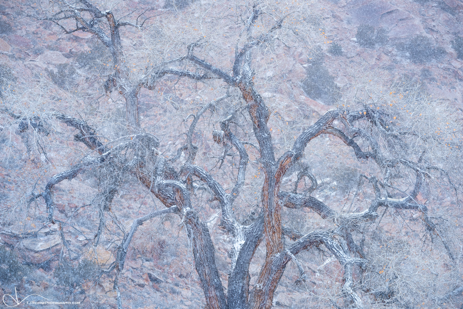 cottonwood, tree, winter, snow, storm, utah, canyon, photo