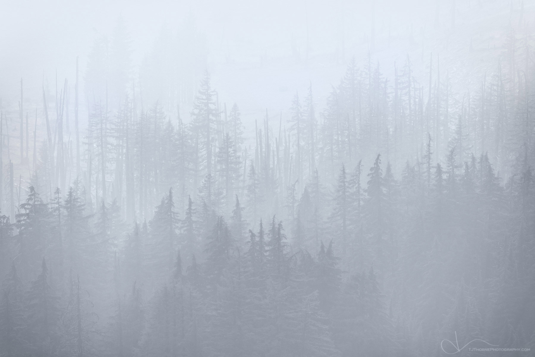 forest, smoke, fog, crater lake, oregon, wildfire, photo