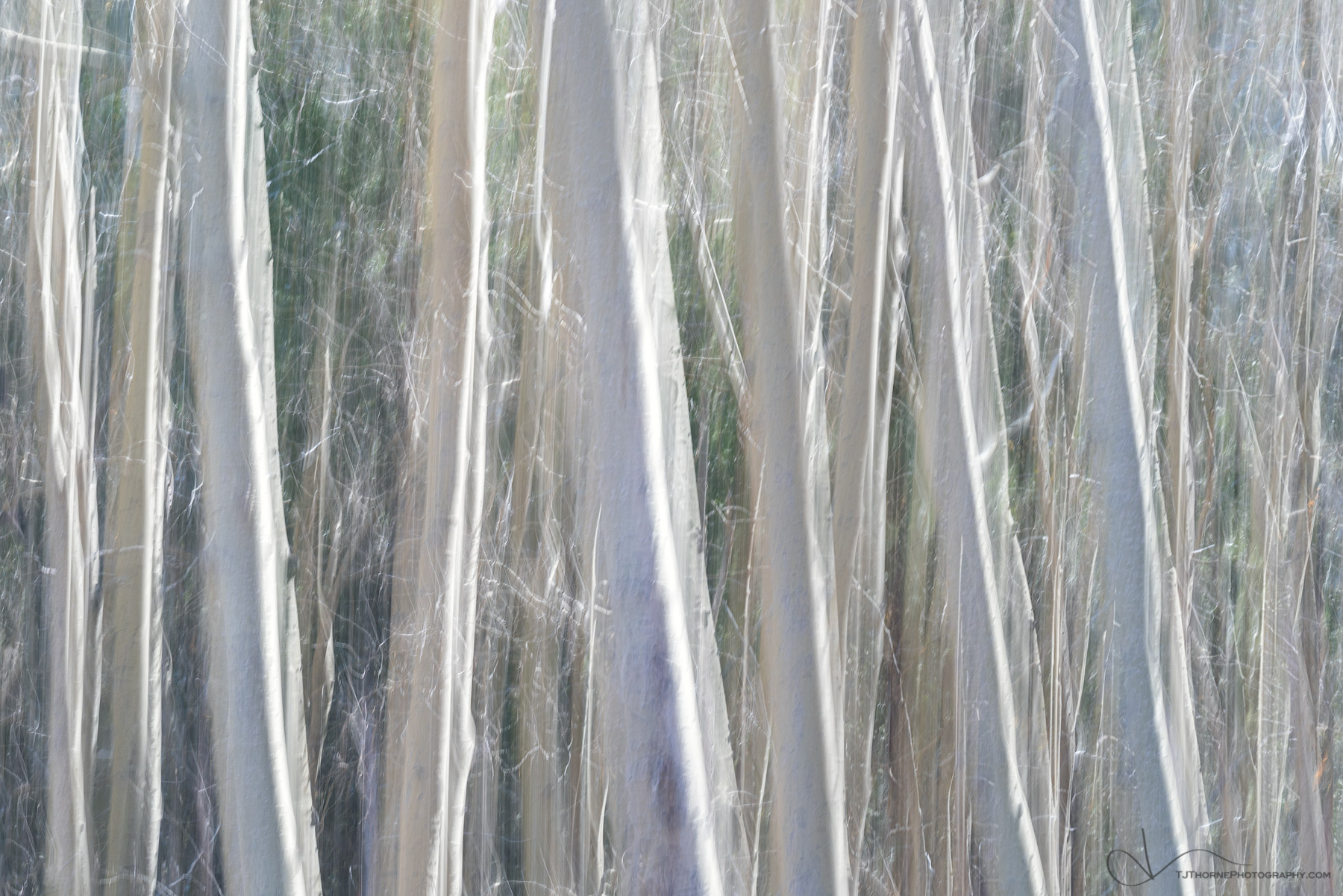 trees, forest, abstract, photo