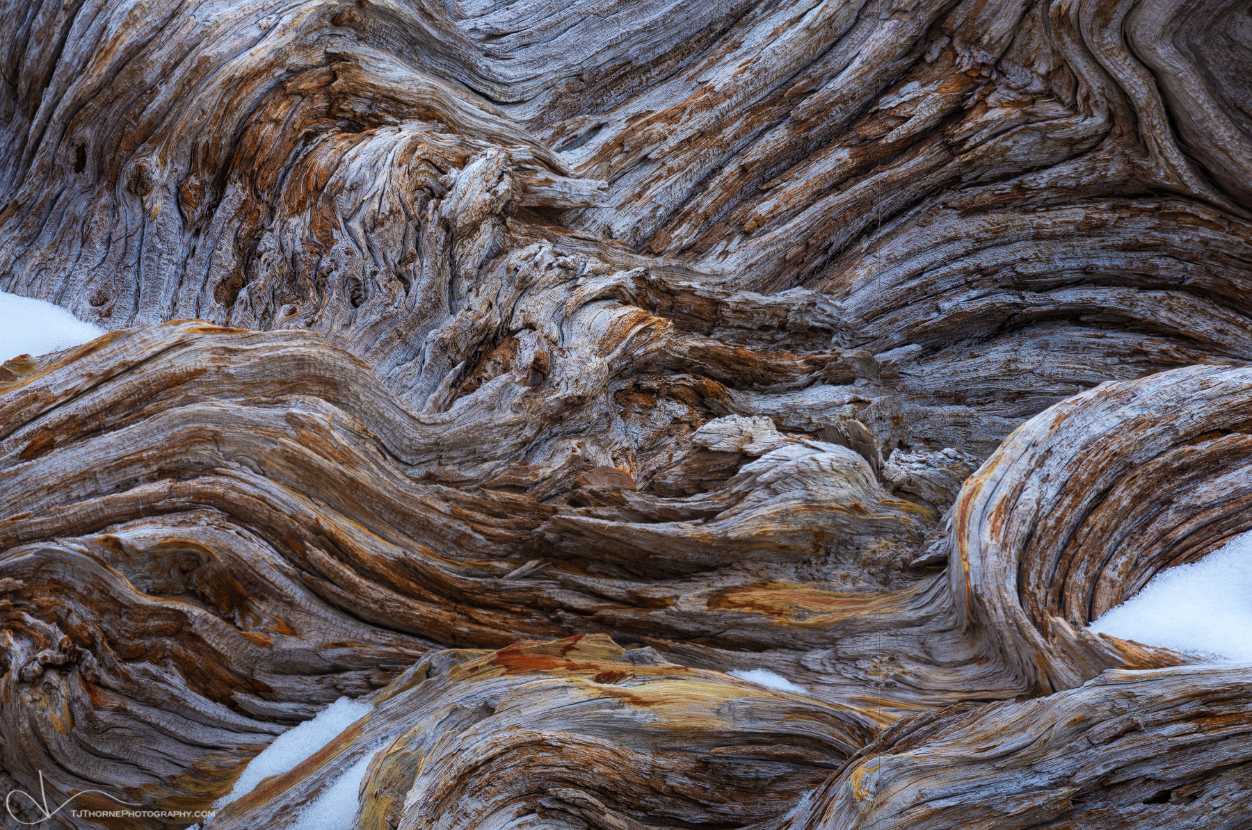 abstract, texture, the enchantments, washington, white bark pine, photo