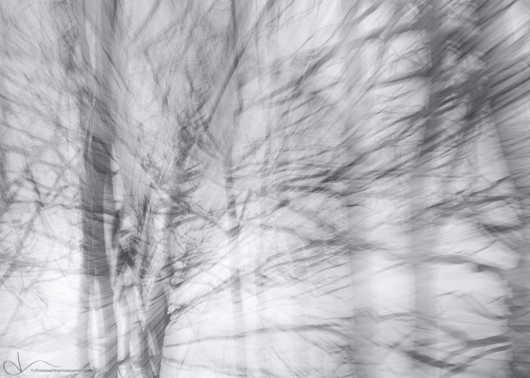 trees, abstract, forest, photo