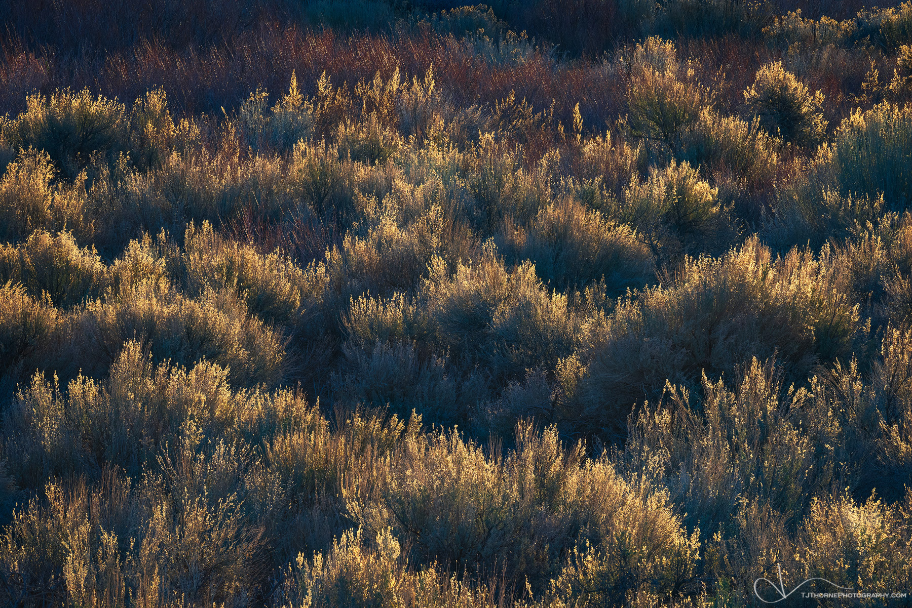 desert, brush, light, owens river valley, california, photo