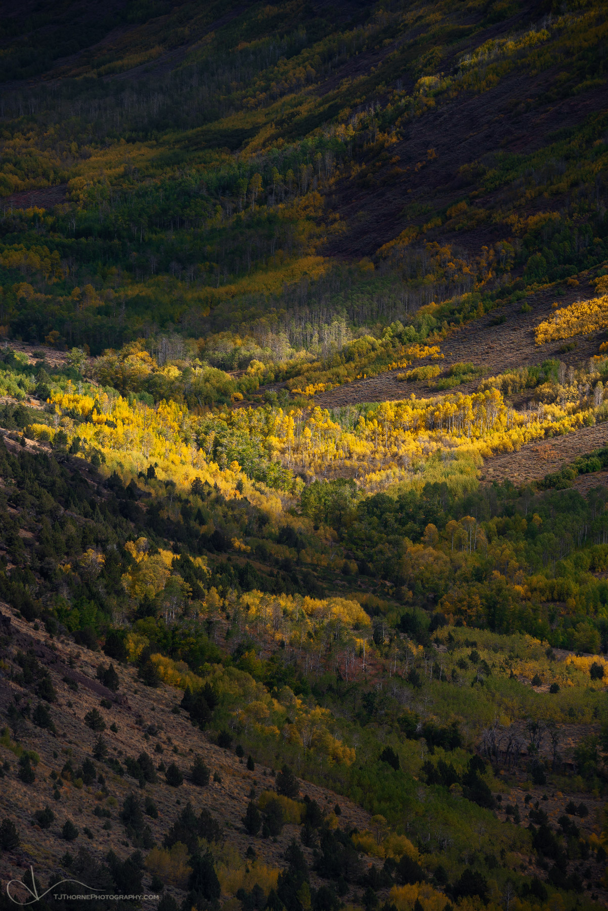 oregon, autumn, steens, mountain, aspen, , photo