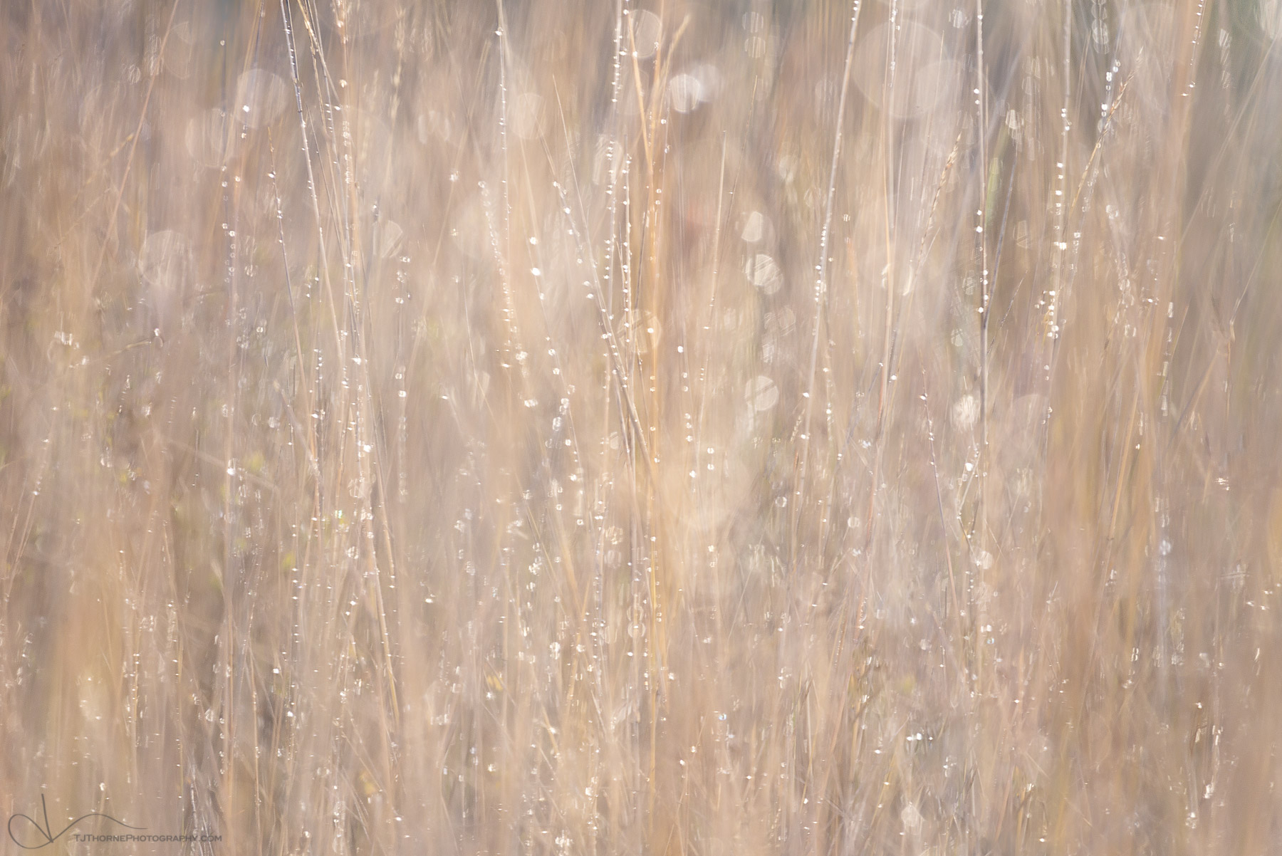 rain, grass, autumn, washington, abstract
