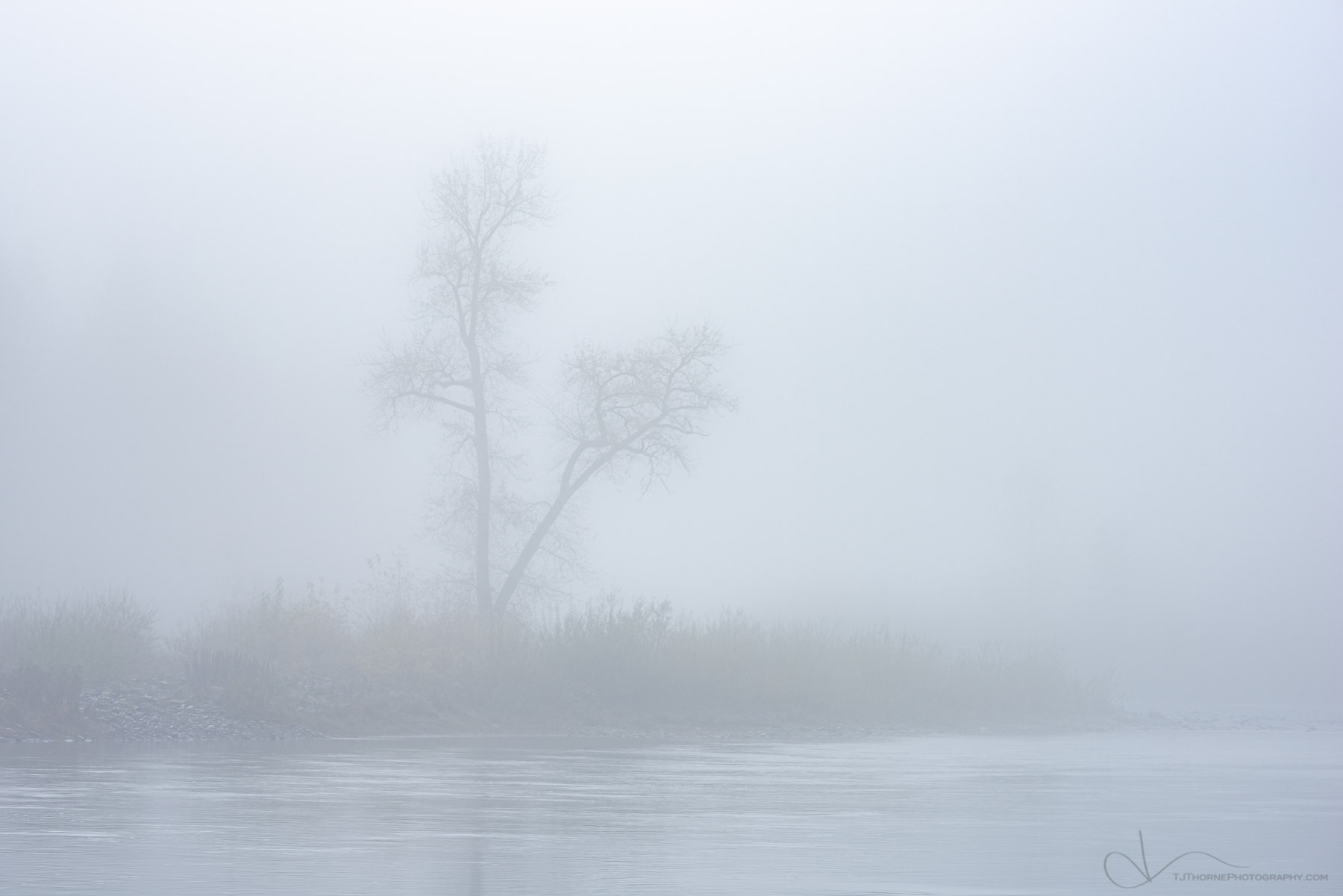 FINE ART LIMITED EDITION OF 100 A lone tree stands in the early morning fog along the Clackamas River, Oregon.