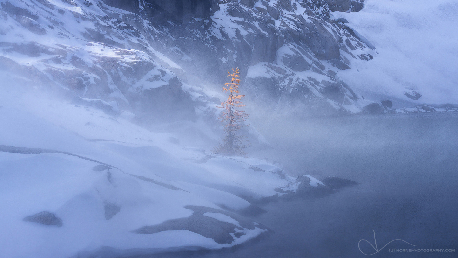larch, snow, enchantments, washington, tree, photo