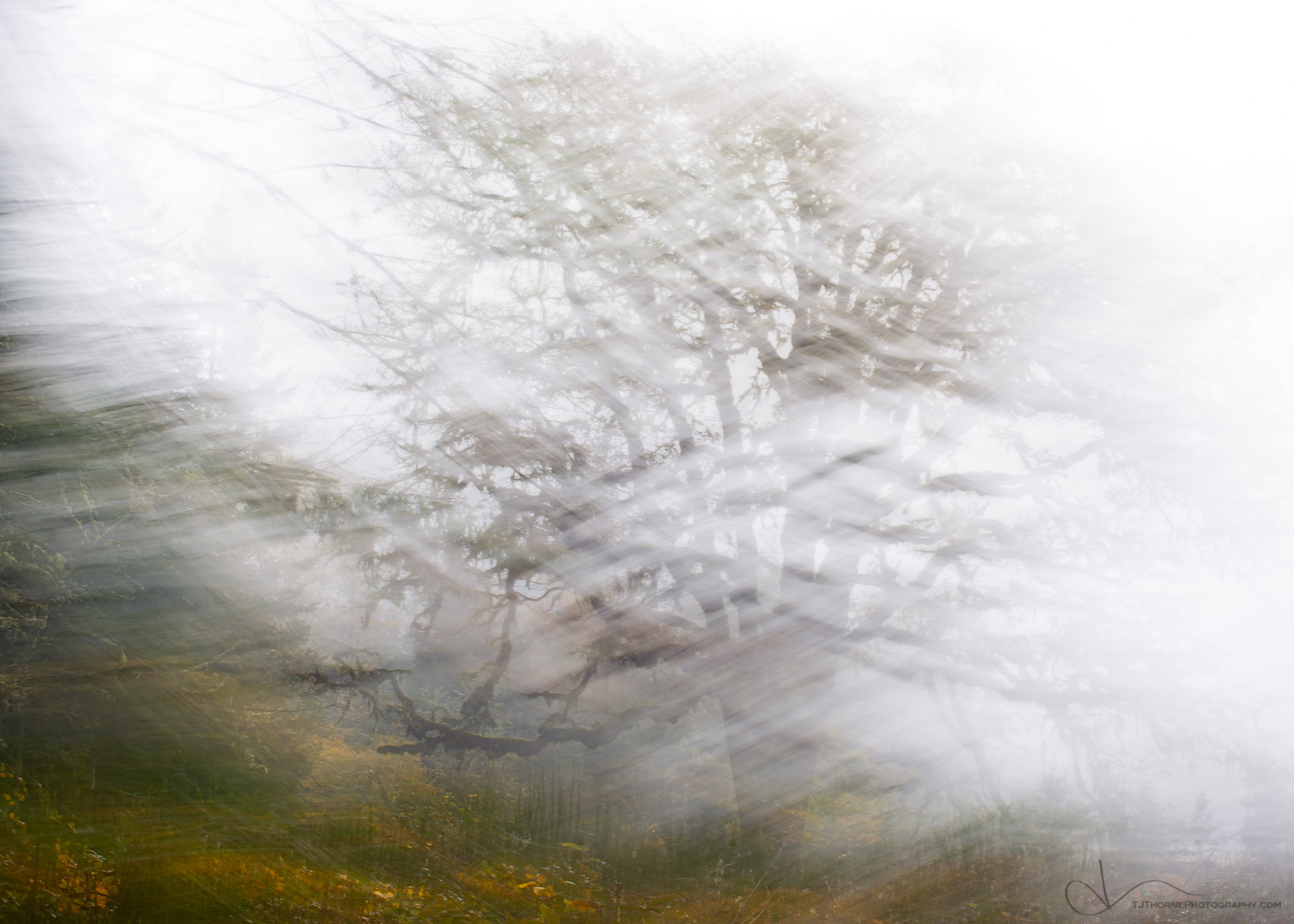 tree, abstract, ICM, ME, forest, oak, photo