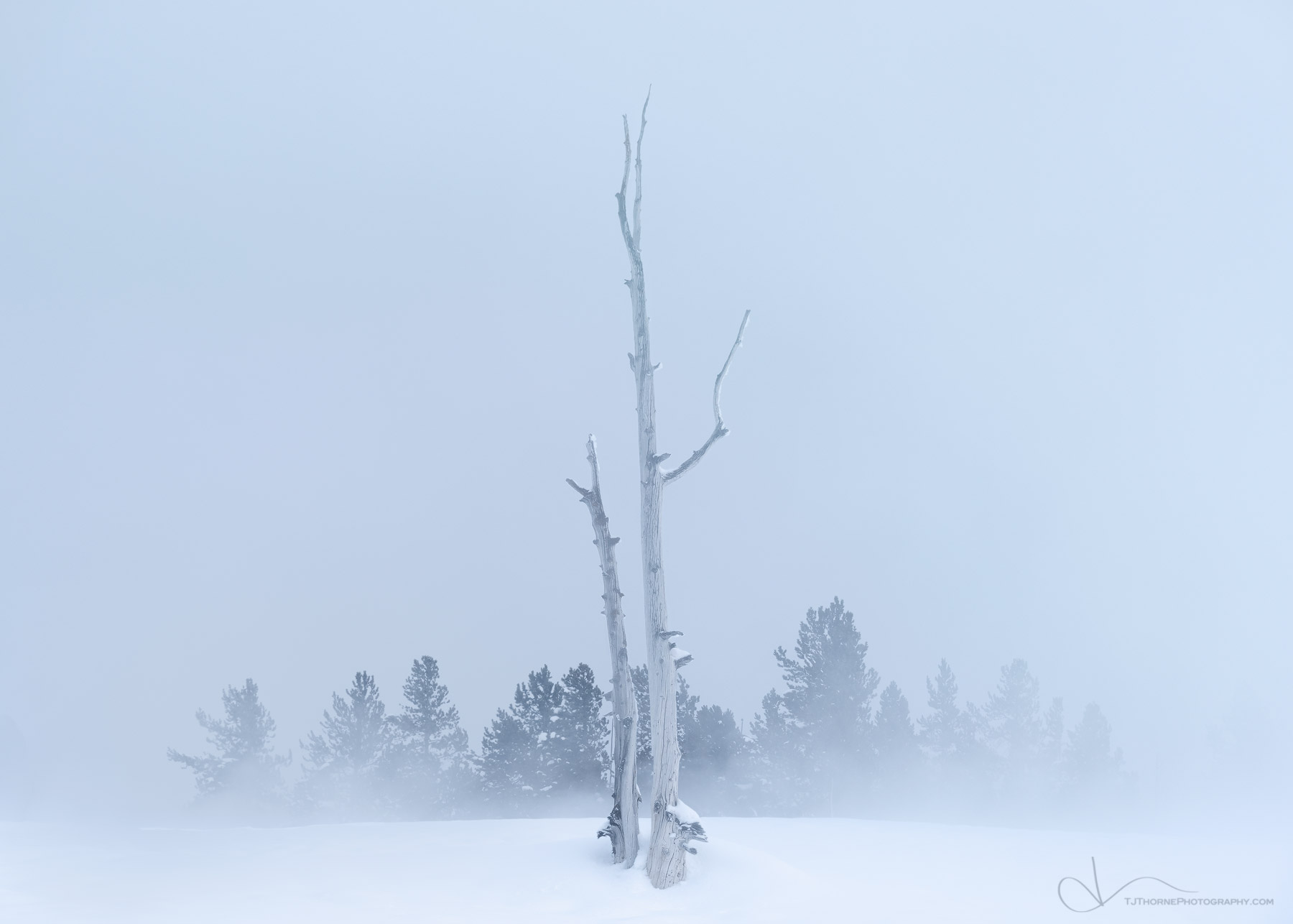 yellowstone, wyoming, trees, snow, steam, winter, geyser , photo