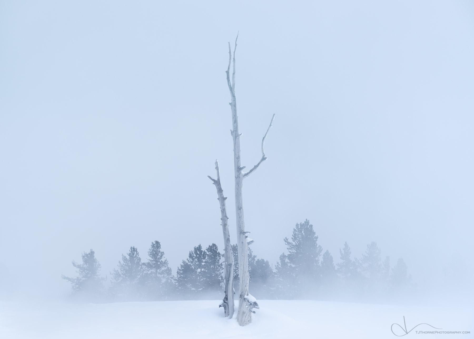 yellowstone, wyoming, trees, snow, steam, winter, geyser, photo