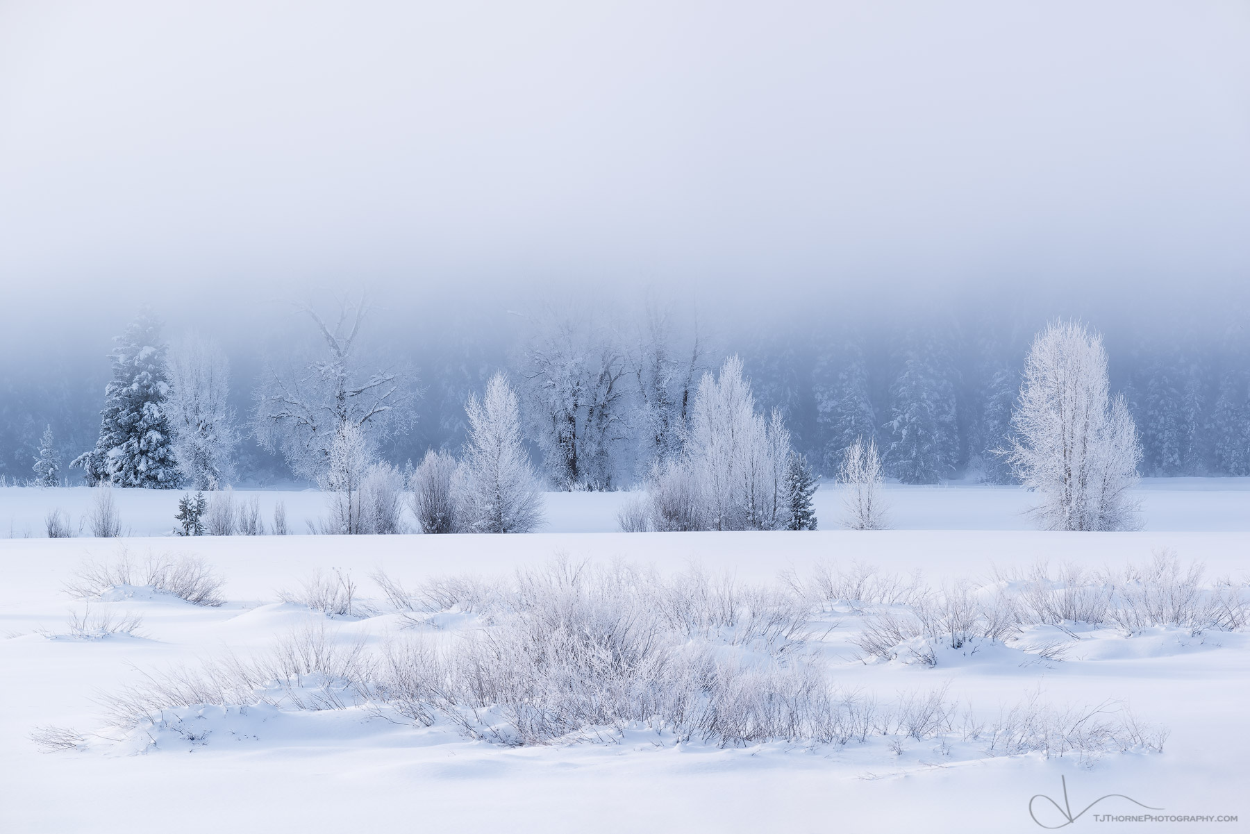 FINE ART LIMITED EDITION OF 100 A near perfectly spaced arrangement of frost covered trees and brush on a snowy winter morning...